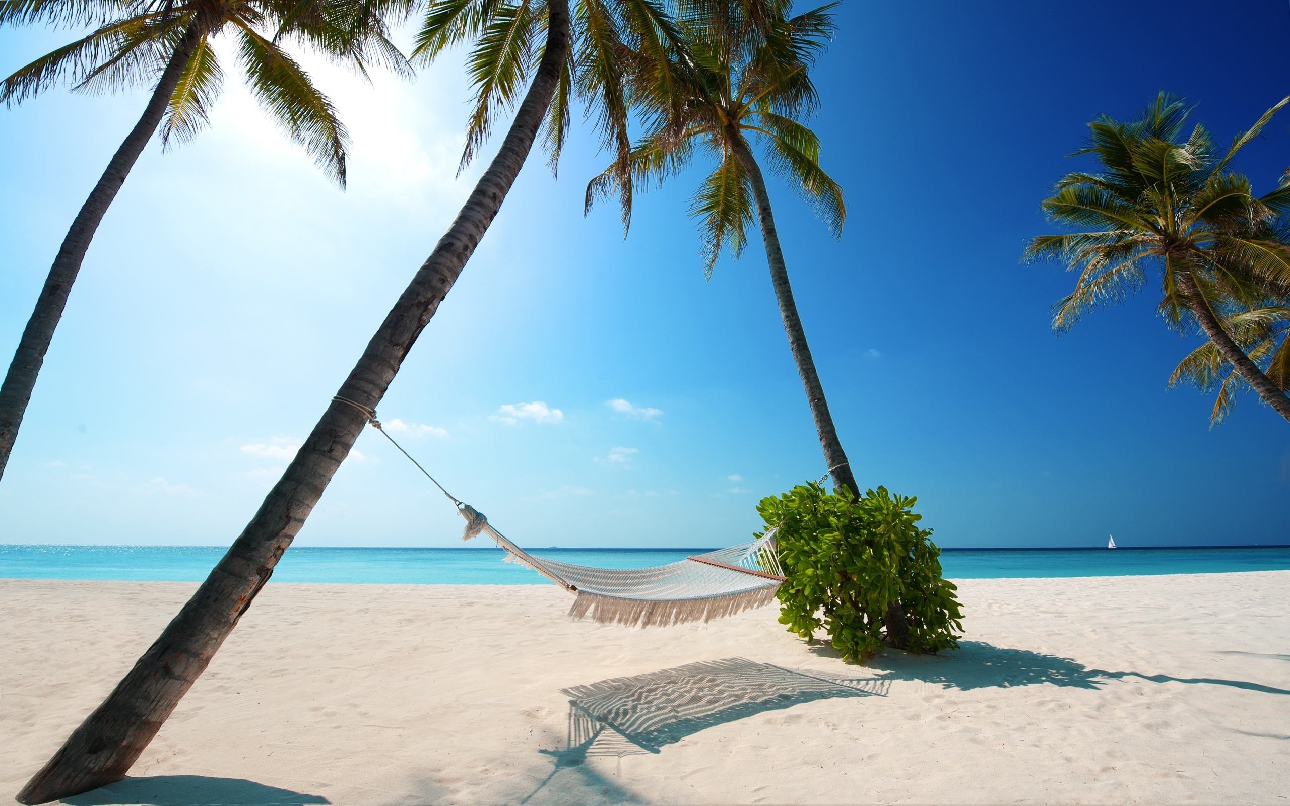 maldives-indian-ocean-tropics-palm-beach-ocean-hammock-blue-sky-sand-nature