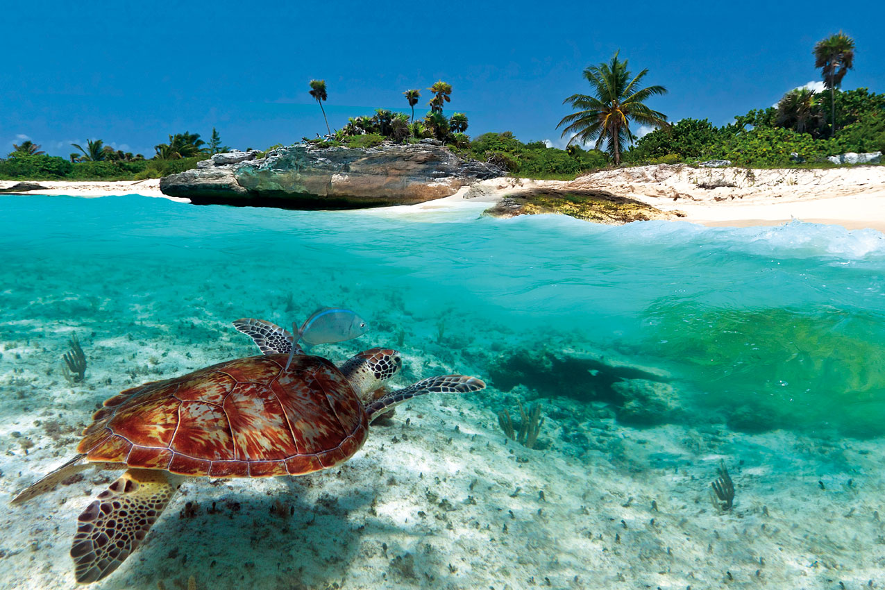 caribbean-picture